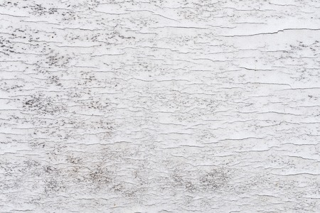 Sample of the cracked paint on wooden surface. Shabby, dirty, and cracked paint. Background and textures, white color
