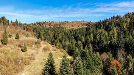 Aerial view of Carpathian Mountains, autumn landscape.