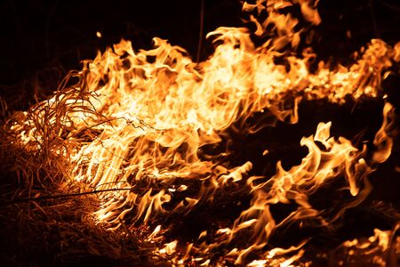 Burning grass in the field, close up. Nature on fire. Themes of fire, disaster and extreme events. Night shot.