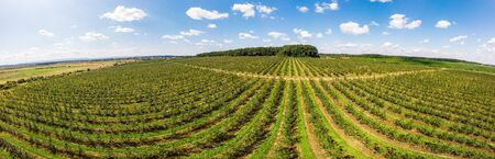 Aerial view of apple orchard with beautiful blue sky on background, panoramic landscape. Themes of agro-industrial business and gardening