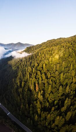 Aerial drone view above misty mountains and coniferous forest. Vertical landscape. Morning time. Carpathians, Ukraine