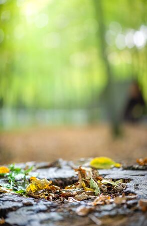 Fall in the forest. Fallen yellowed leaves lie on stump, light rays breaking through the thick of trees. Vertical natural background with copy space for text. Stockfoto