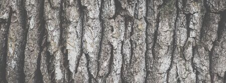 Wide angle abstract background with matte efect, banner format. Texture of oak tree bark closeup. Stockfoto