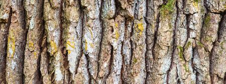 Oak tree bark, close up view. Sample of texture, natural background in banner format. Stockfoto