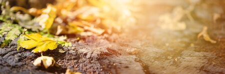 Fallen colorful leaves lie on old oak stump in soft sunlight. Autumn in the forest. Natural background with copy space.