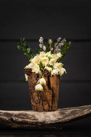 Leucojum vernum in a decorative vase. Is the first spring snowflake. Theme of International Womens Day, 8th of March Imagens