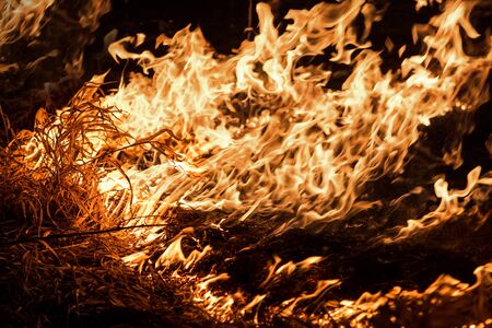 Burning grass in the field, close up. Nature on fire. Themes of fire, disaster and extreme events. Night shot