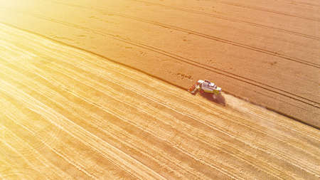 Aerial drone view of combine harvester collects harvest grain in a wheat field in summer sunny day. Agricultural machinery works in the farmland Фото со стока