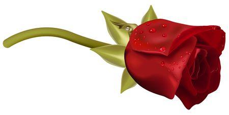 Rote Rose mit Regentropfen