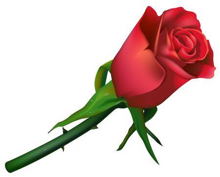 flowered: Wedding Rose Red