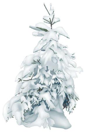 coniferous: Coniferous Tree Stock Photo