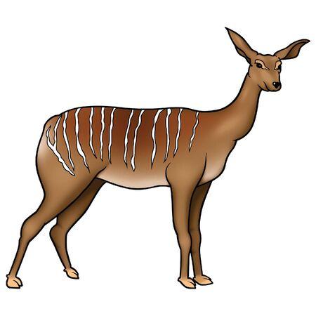 ruminant: Antelope 02 Stock Photo