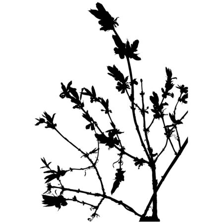 spire: Floral silhouette 09