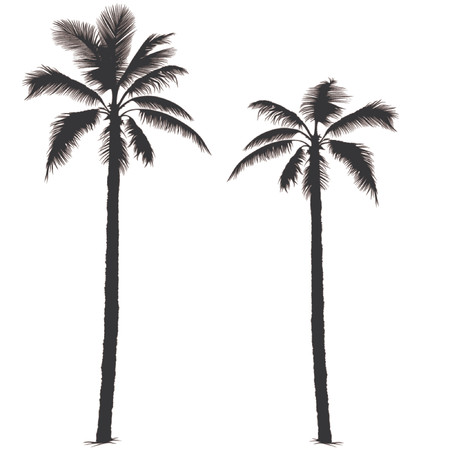tree illustration: Palm tree silhouette 1 - Highly detailed black silhouette