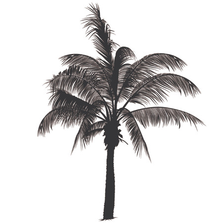 palm tree vector: Palm tree silhouette 2 - Highly detailed black silhouette