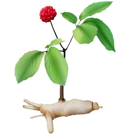 homeopathic: Panax ginseng