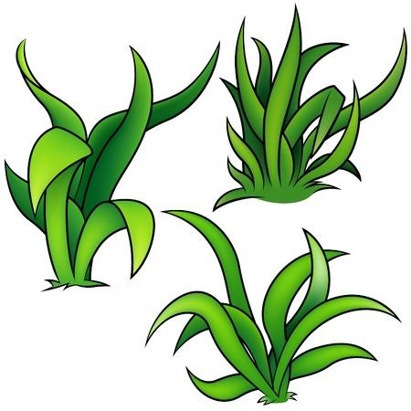 clump: Grass Set A - detailed cartoon illustration as vectors Illustration
