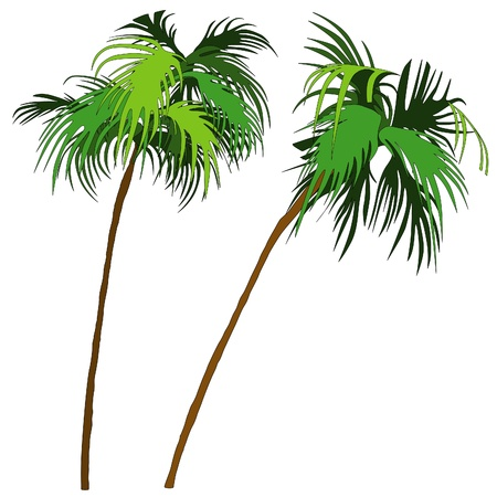 Palms 1 - two colored palm-tree illustration as vector Stock Vector - 3214059