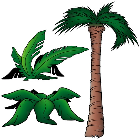 three colored: Palms 5 - three colored cartoon illustration as vector