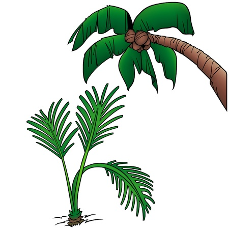 Palms 6 - two colored cartoon illustration as vector Vector