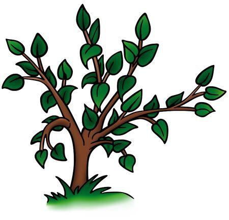 deciduous tree: �rbol caducifolio - detallada ilustraci�n de dibujos animados como vector