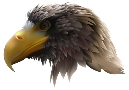 bird of prey: Eagle (Haliaeetus pelagicus) - Sea-eagle, detailed illustration as vector