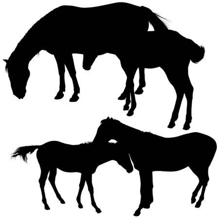 merrie: Silhouet tes 6 - gedetailleerde silhouet illustraties vector paarden  Stock Illustratie