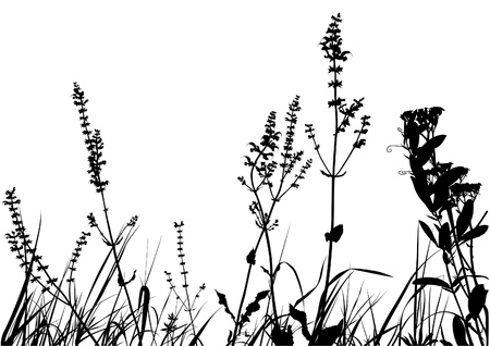burgeon: Grass Silhouette 01 - detailed illustration as vector