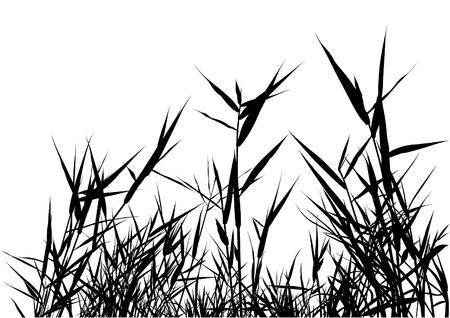 Silueta de hierba 03 - ilustración detallada como vector