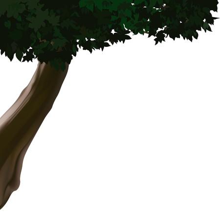 deciduous tree: �rbol de hoja caduca - fuente de ilustraci�n como vector