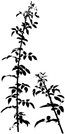 leafs: Shrub Silhouette 01 - detailed illustration as vector