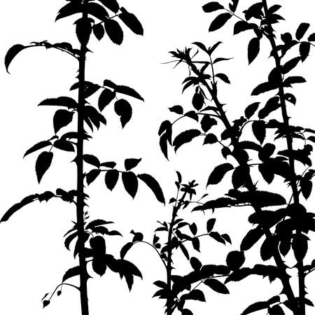 thorn bush: Shrub Silhouette 02 - detailed illustration as vector