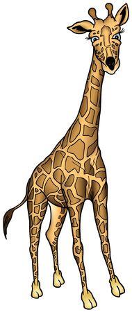 Jirafa de África - de color de dibujos animados como ilustración vectorial