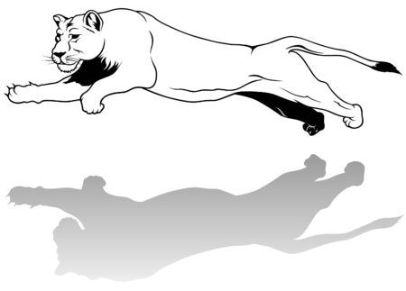 lioness: Lioness - black outline illustration as vector