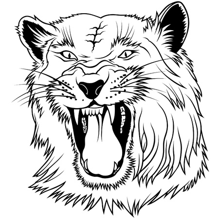 Wild Big Cat - black outline illustration as vector Vector