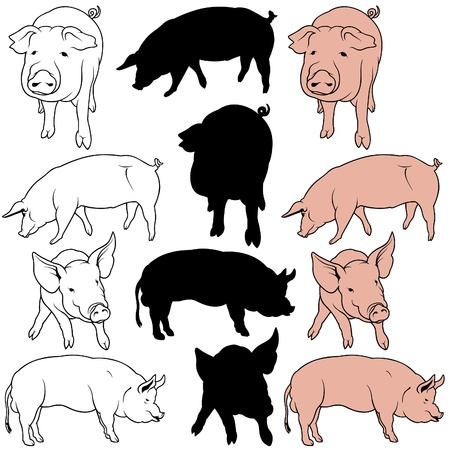 cut outs: Pig Set 01 - colored hand drawn illustration as vector