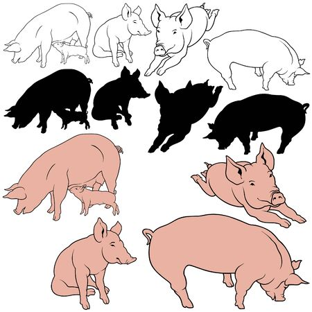 porker: Pig Set 03 - colored hand drawn illustration as vector