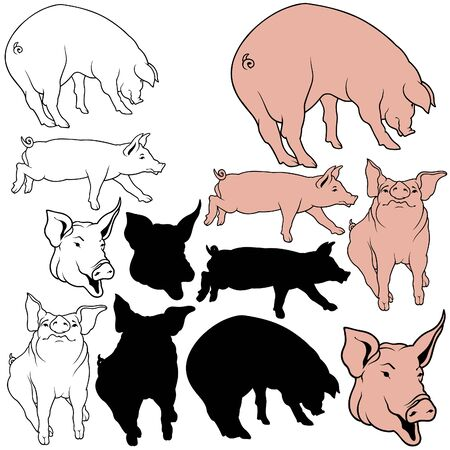 porker: Pig Set 04 - colored hand drawn illustration as vector Illustration