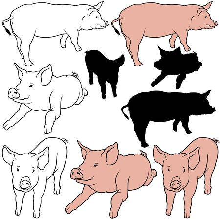 porker: Pig Set 05 - colored hand drawn illustration as vector Illustration