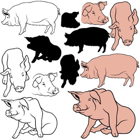 hooves: Pig Set 06 - colorata a mano, come stabilito illustrazione vettoriale