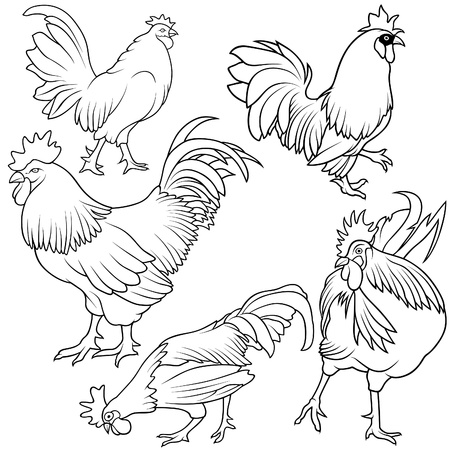 Rooster Set 1 - black hand drawn illustration as vector