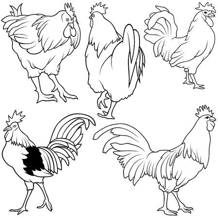 cockerel: Rooster Set 2 - black hand drawn illustration as vector