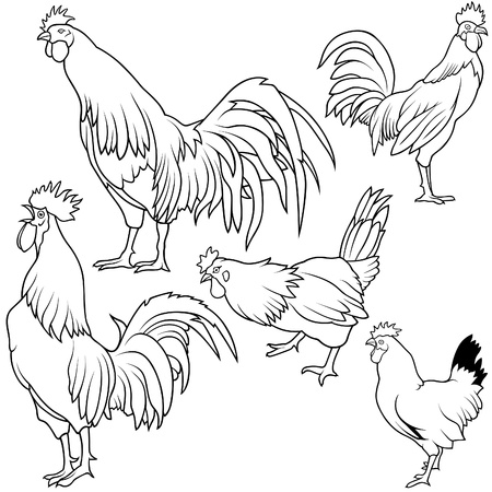 Rooster Set 3 - black hand drawn illustration as vector Stock Vector - 5177464