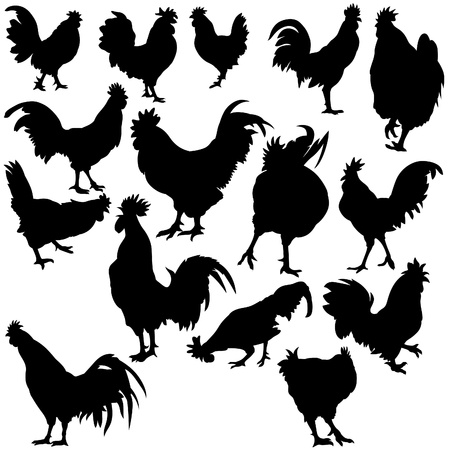 cockerel: Rooster Silhouettes - black hand drawn illustration as vector