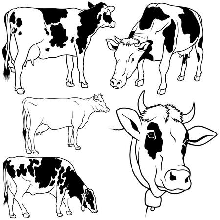 vaca: Vaca Set 02 - negro elaborado a mano ilustraci�n como vector