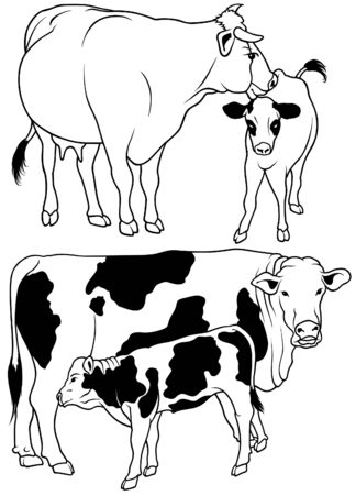calves: Cow Set 04 - black hand drawn illustration as vector