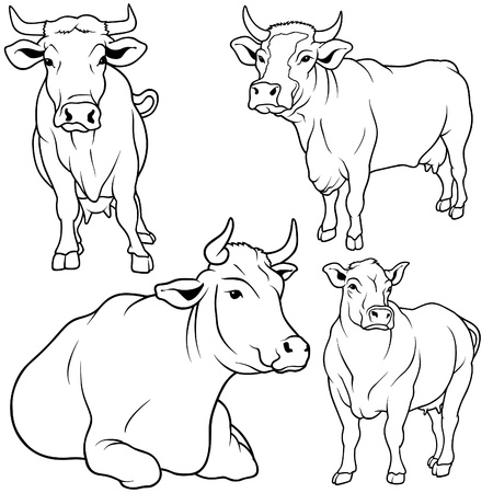sketch out: Cow Set 05 - black hand drawn illustration as vector Illustration
