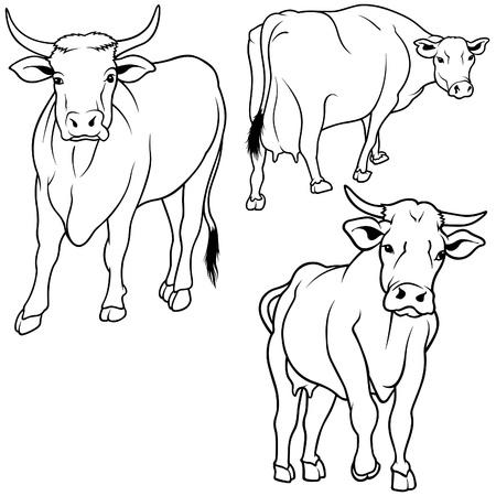 hoofed animal: Vaca Set 06 - negro elaborado a mano ilustraci�n como vector Vectores