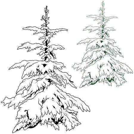 coniferous: Snowy Coniferous Tree