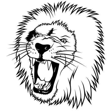 lion drawing: Lion Head - illustrazione disegnato a mano  Vettoriali